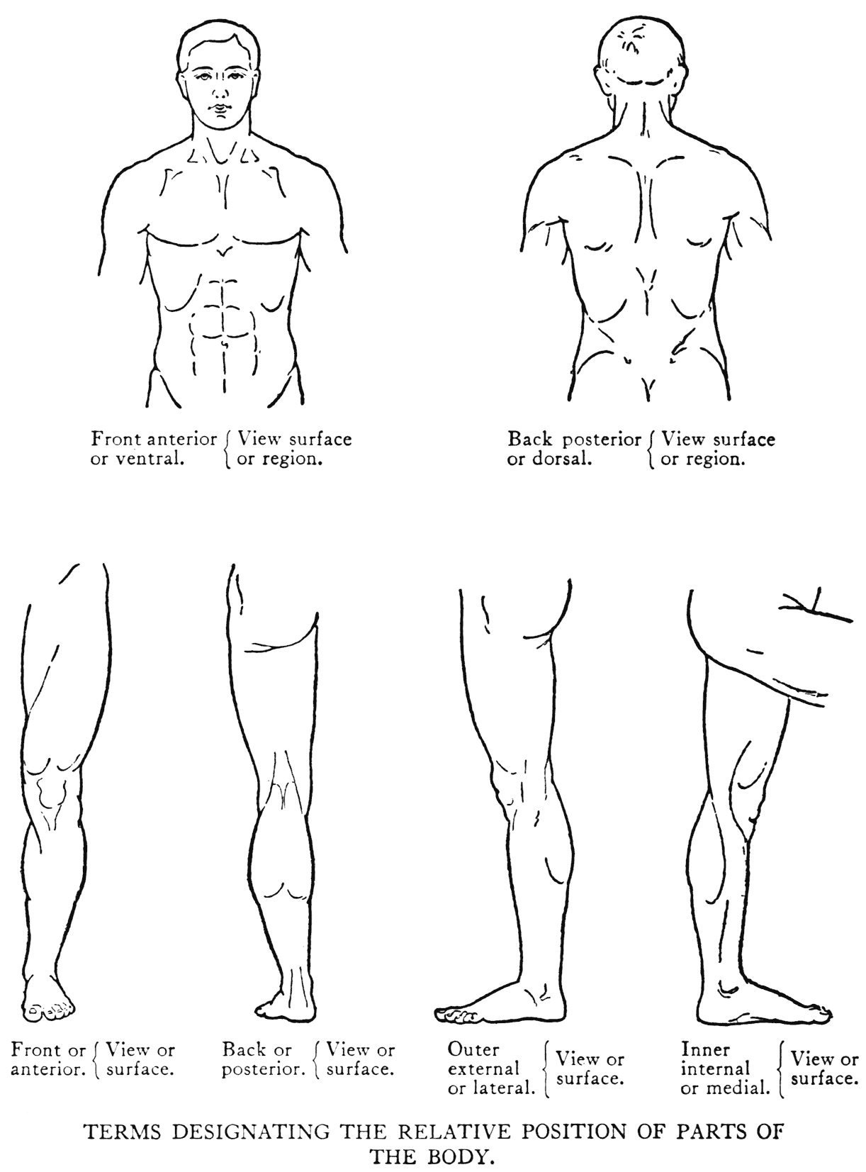 sketch of human body front and back coloring pages